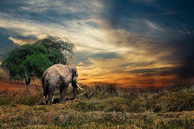 slon u stromu