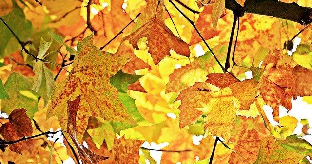 3 typy, jak zabavit děti na podzim