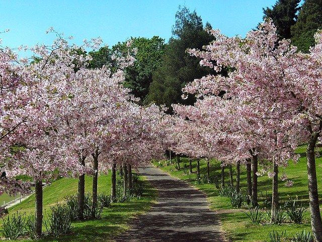 Bez vody a stromů nebude život