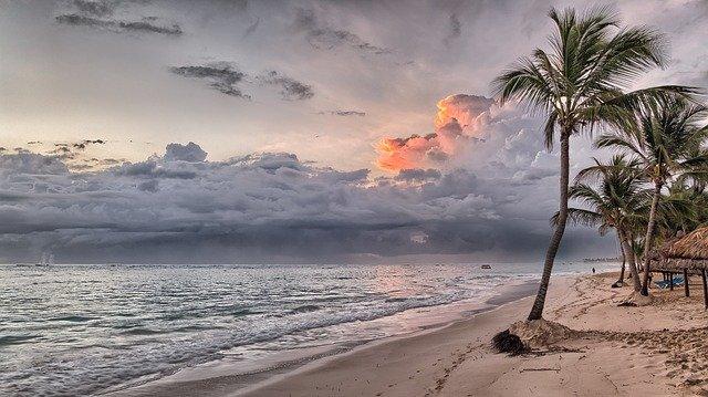 palmy u moře